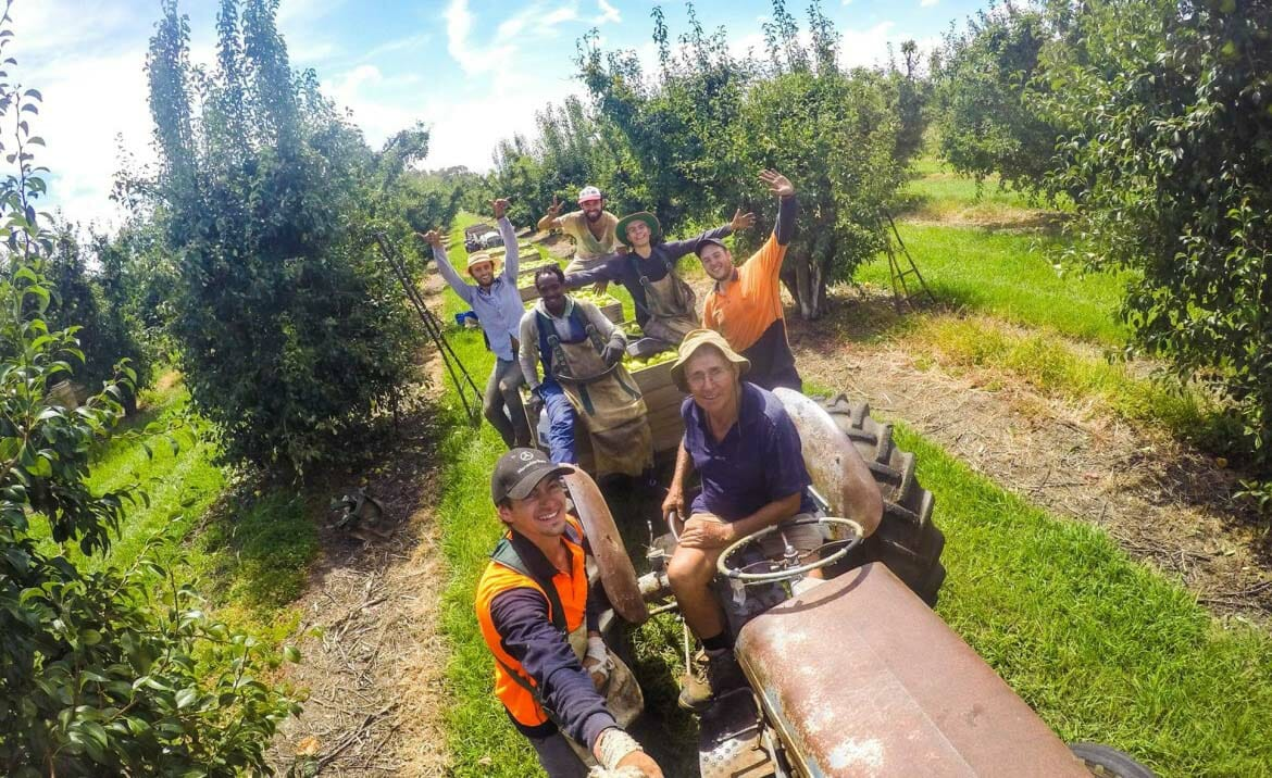 travailler en australie fruit picking