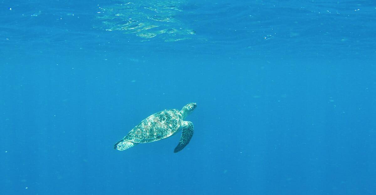 snorkelling-gili-air-bali