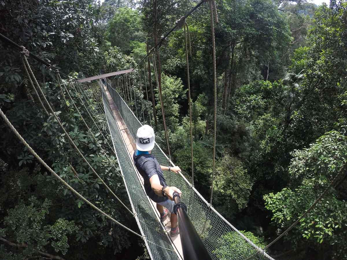 canopy walkway taman negara