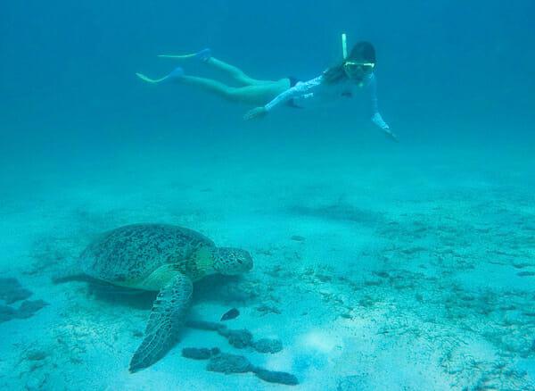 ile perhentian malaisie plongee tortue