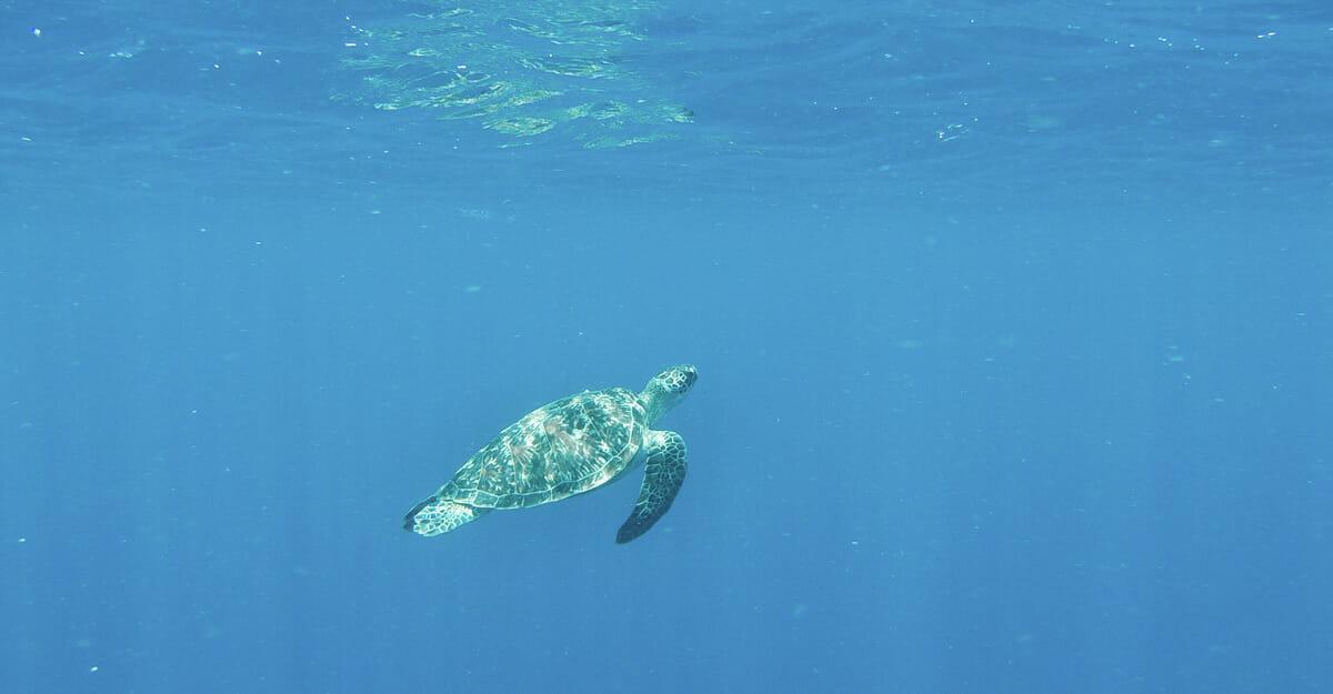 tortue gili air bali plongee