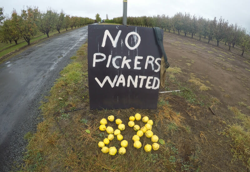 no pickers wanted australie