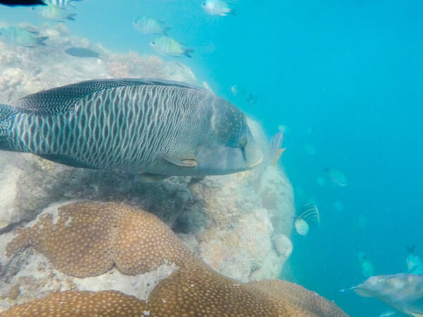 iles whitsundays snorkelling australie