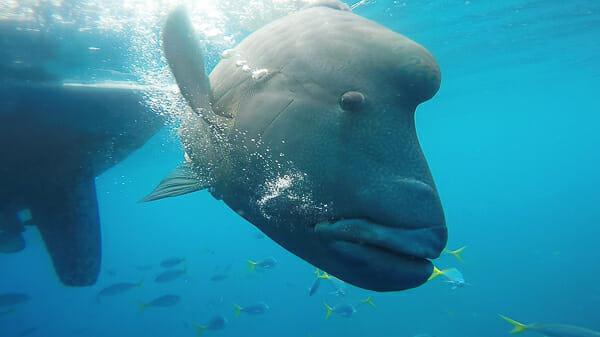 snorkelling iles whitsundays australie