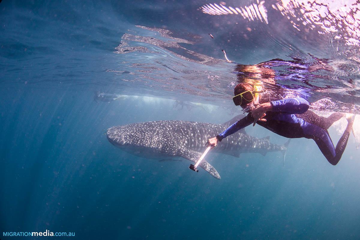 voyage australie plonger requin baleine