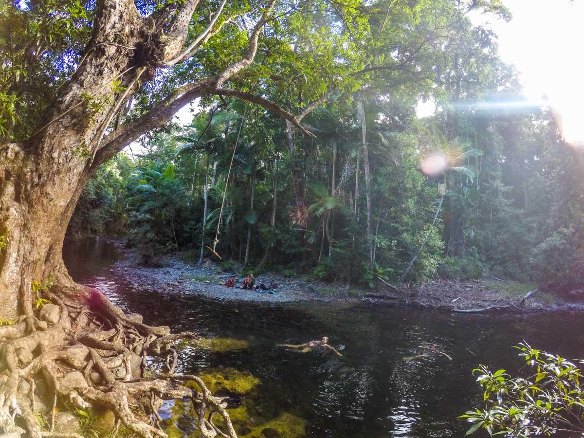 foret tropical de daintree nord cairns