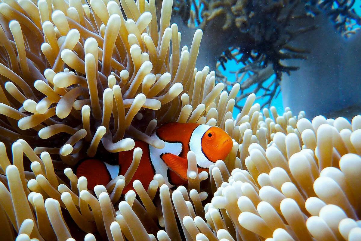 grande barriere de corail cairns australie