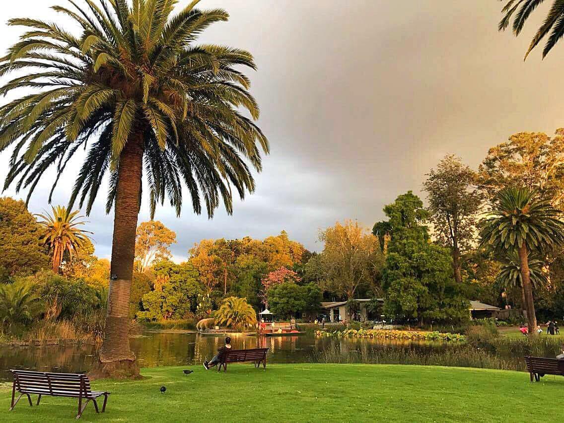 que faire a melbourne jardin botanique royal