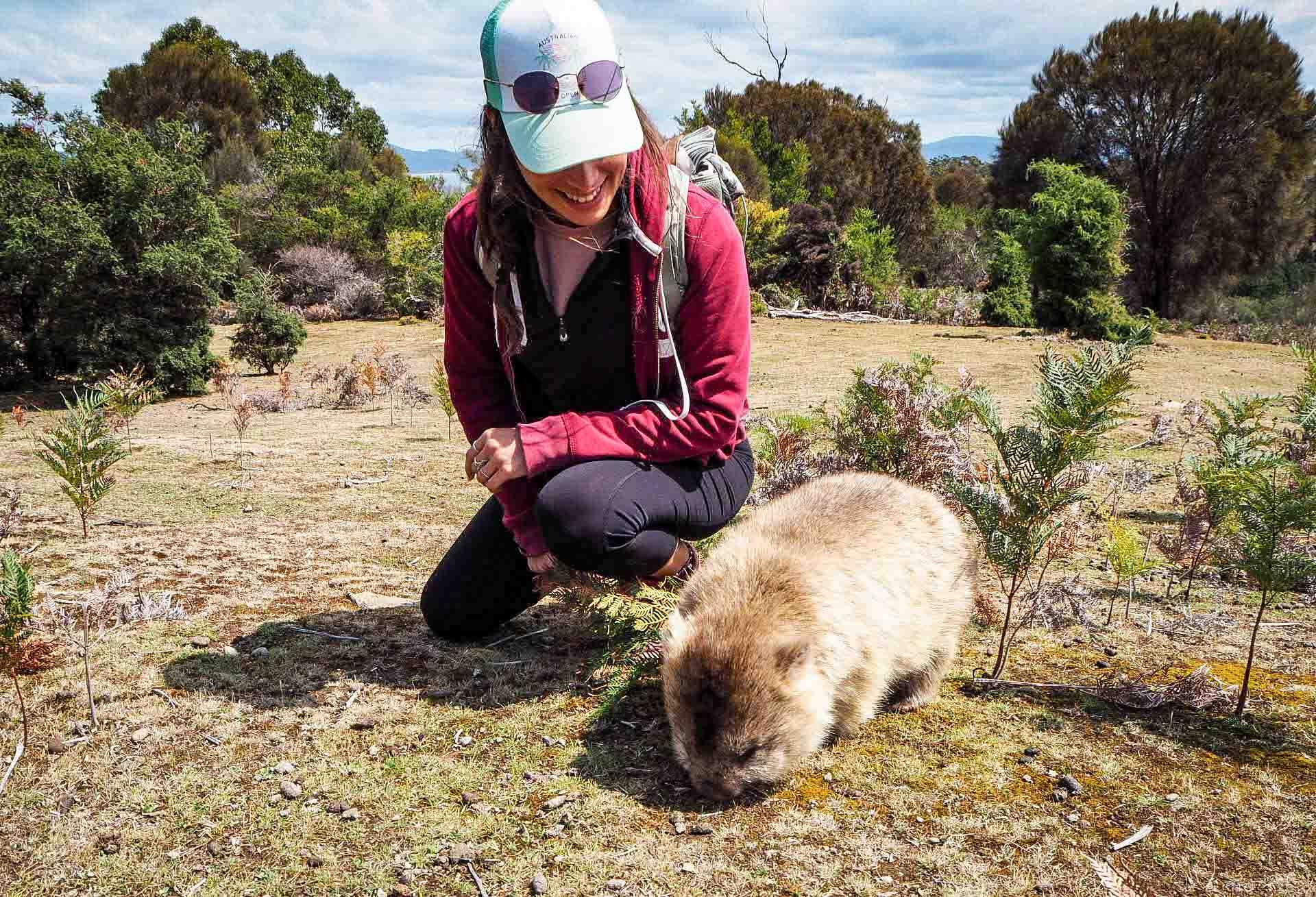 ou voir wombat wilsons promontory